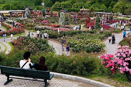 花フェスタ記念公園-2