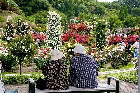花フェスタ記念公園-3