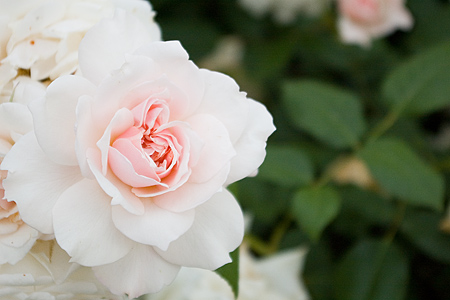 花フェスタバラ-2