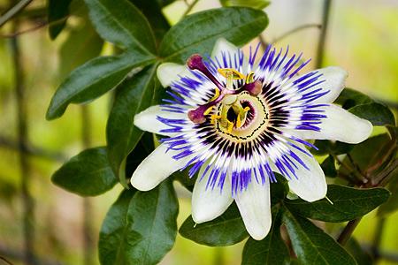 花フェスタの花たち-2