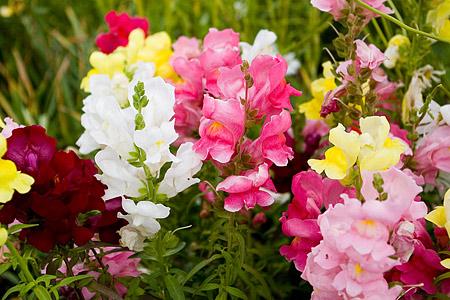花フェスタの花たち-3
