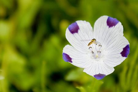 花フェスタの花たち-4