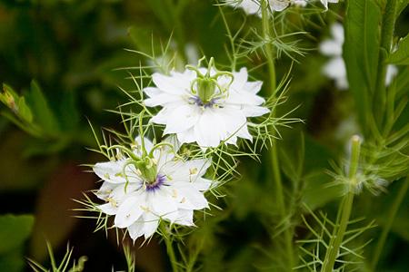 花フェスタの花たち-5