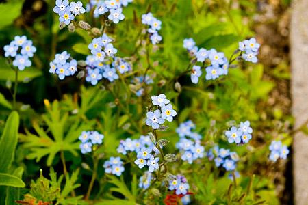 花フェスタの花たち-6