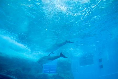 名古屋港水族館イルカ水槽