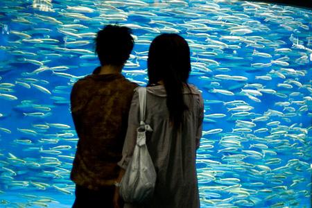 名古屋港水族館マイワシの群れ