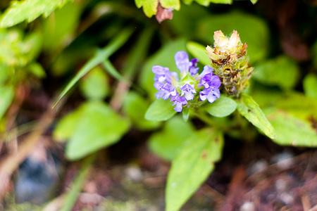 森林公園の花-4