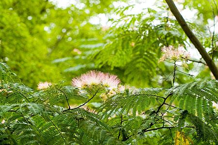 森林公園の花-5