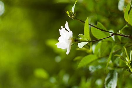 森林公園の花-7