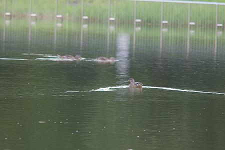 庄内緑地で鳥撮り-6