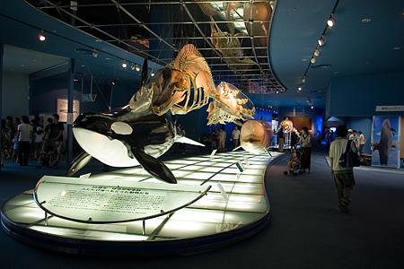 名古屋港水族館-4