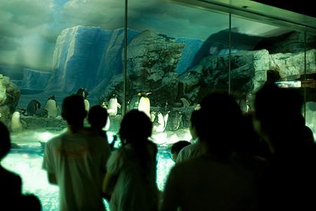 名古屋港水族館-6