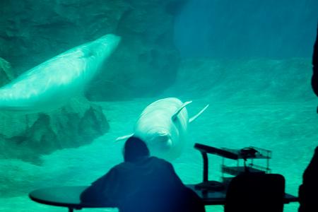 名古屋港水族館-8