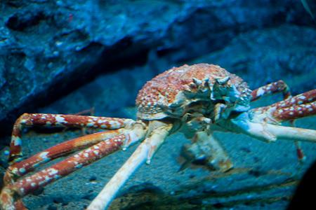 地味魚名古屋港水族館-7