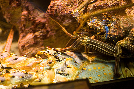 地味魚名古屋港水族館-8