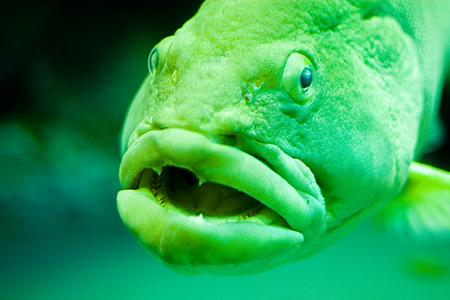 名古屋港水族館の魚たち-1