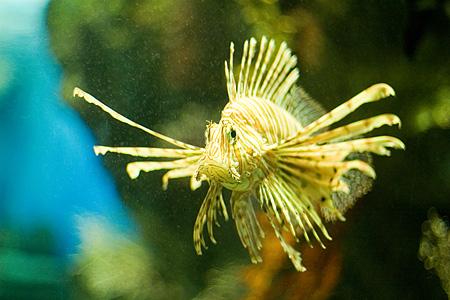 名古屋港水族館の魚たち-3