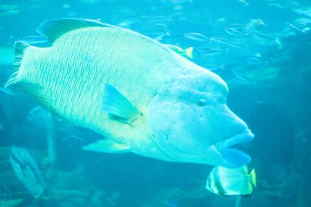 名古屋港水族館の魚たち-4