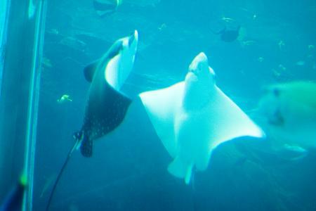 名古屋港水族館の魚たち-5