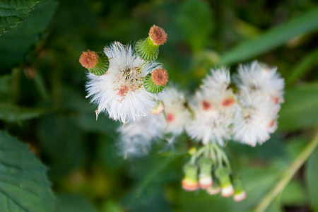 田舎の花たち-7