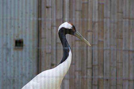 東山の鳥たち-2
