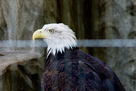 東山の鳥たち-4