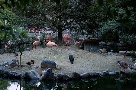 東山の鳥たち-8