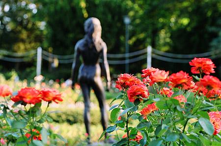 バラ園と銅像