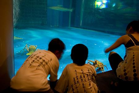 しながわ水族館の人々-8