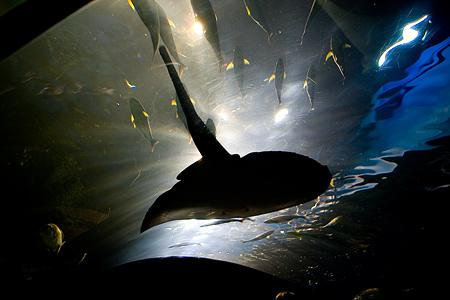 しながわ水族館の魚1-1