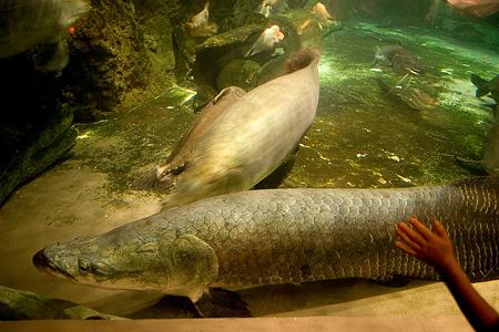 しながわ水族館の魚1-3