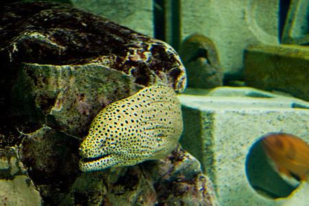 しながわ水族館の魚1-7