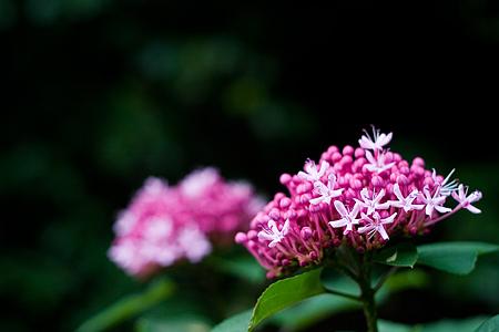 岩屋堂9月の花-1