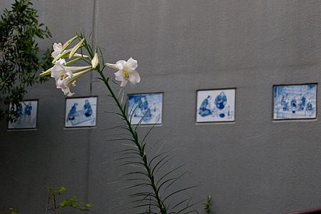 岩屋堂9月の花-7
