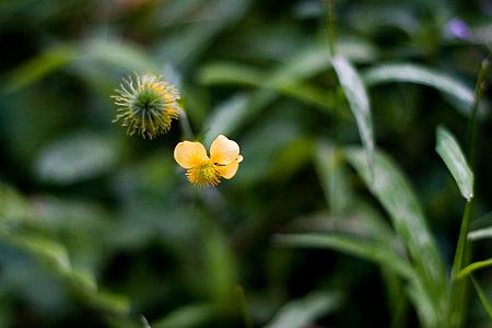 岩屋堂9月の花-8