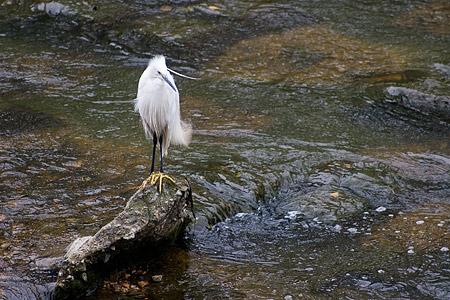 香流川の生き物-6
