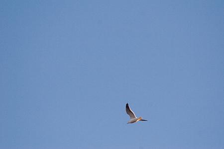 名古屋市野鳥観察館-6