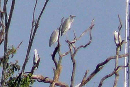 弥富野鳥園-10