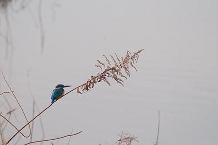 牧野ヶ池の鳥-1