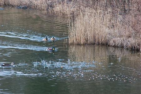 牧野ヶ池の鳥-10