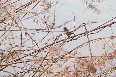 牧野ヶ池の鳥-5
