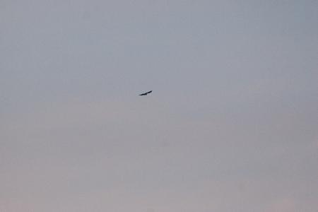 牧野ヶ池の鳥-8