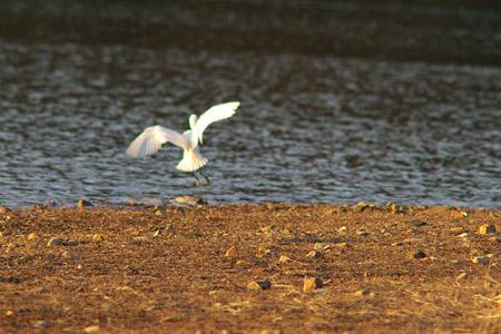 小幡緑地鳥撮り-3