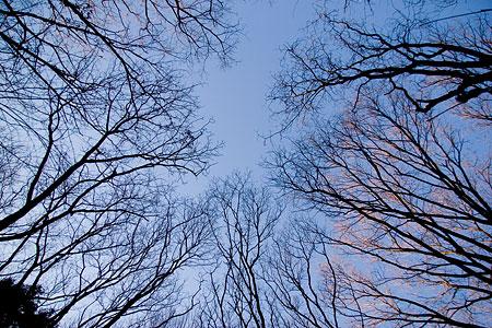冬の海上の森前-7