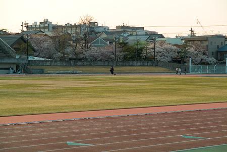 山崎川桜-11