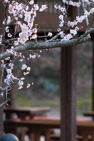 松平郷の花-6