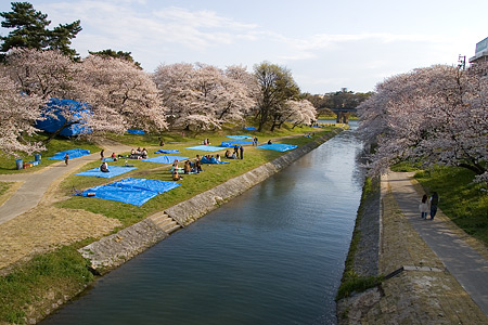 岡崎城桜1-1