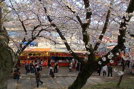 岡崎城桜1-2