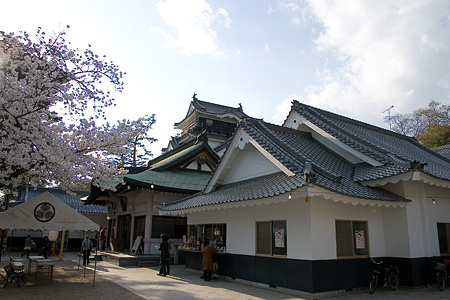 岡崎城桜1-3