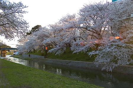 岡崎城桜1-4